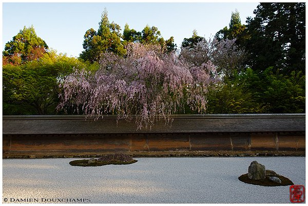 Blossoms above the mysterious rocks - image copyright Damien Douxchamps