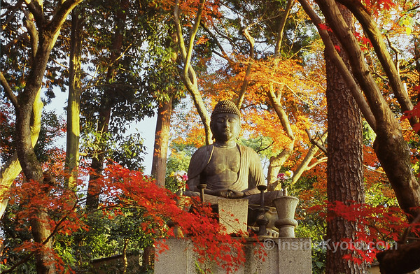 Buddha in the leaves