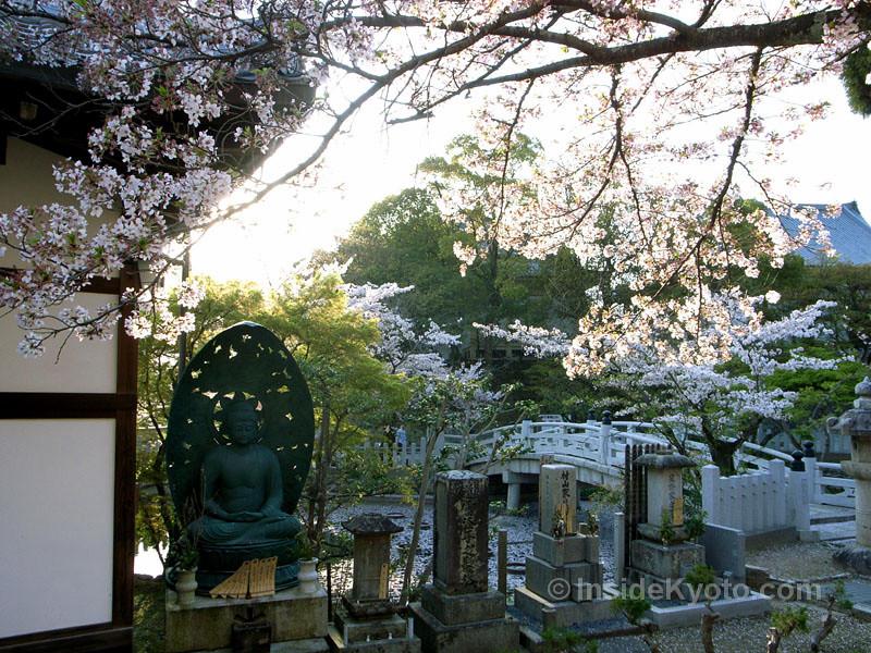 Amida Buddha at Kurodani temple with cherry blossoms
