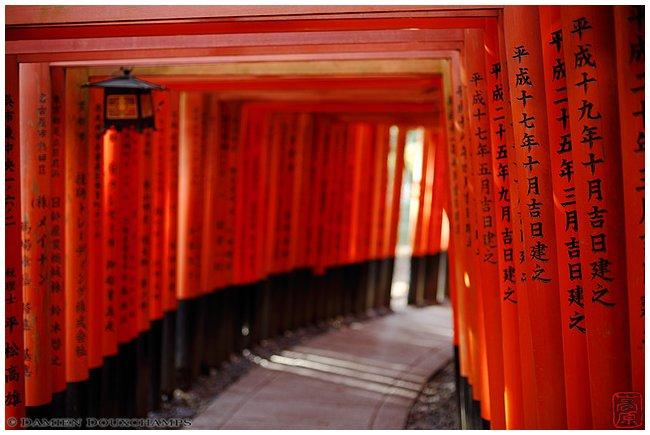 Torii tunnels at Fushimi-Inari-Taisha Shrine image copyright Damien Douxchamps