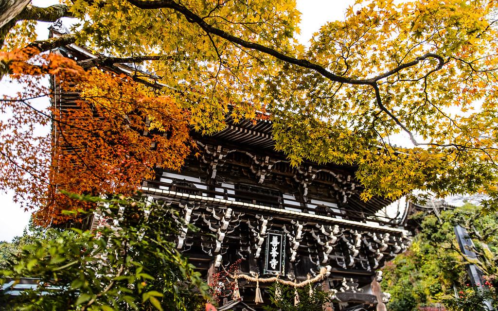 Yoshimine-dera Temple gate with fall foliage image copyright Jeffrey Friedl