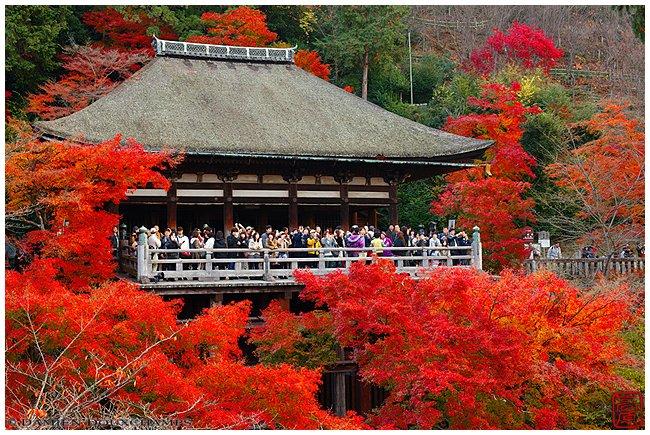 Kiyomizu-dera main hall with maples image copyright Damien Douxchamps