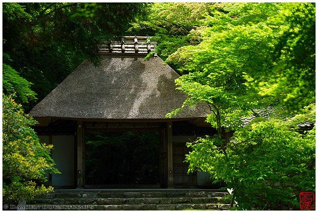 Honen-in Temple gate in spring image copyright Damien Douxchamps