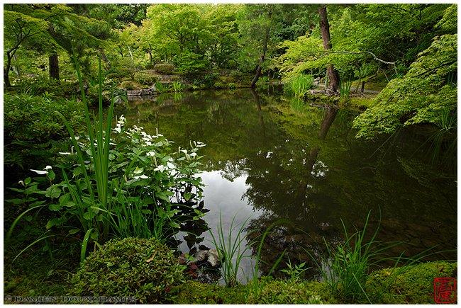 Toji-in Temple garden pond in summer image copyright Damien Douxchamps