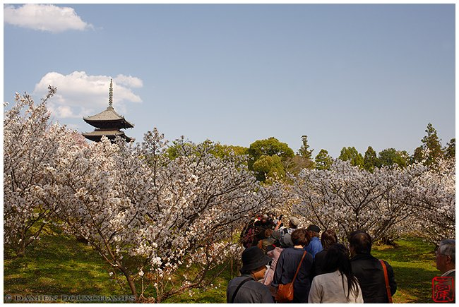 Ninna-ji Temple in spring image copyright Damien Douxchamps