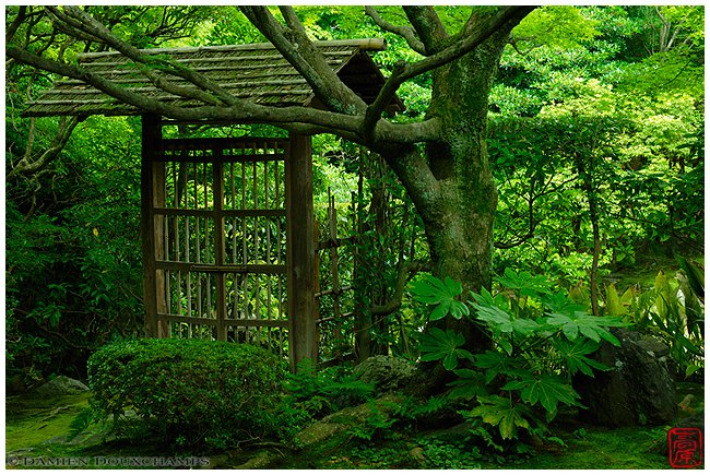 Keishun-in Temple garden with spring green image copyright Damien Douxchamps