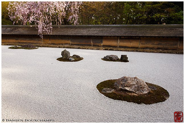 Ryoan-ji Temple garden with cherries image copyright Damien Douxchamps
