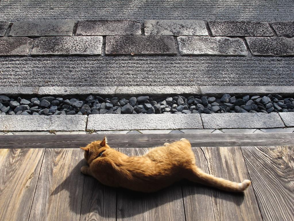 Zen mind. Zen cat.